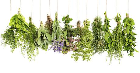 Jitka Bártová: Jarní povídání o bylinkové očistné kůře